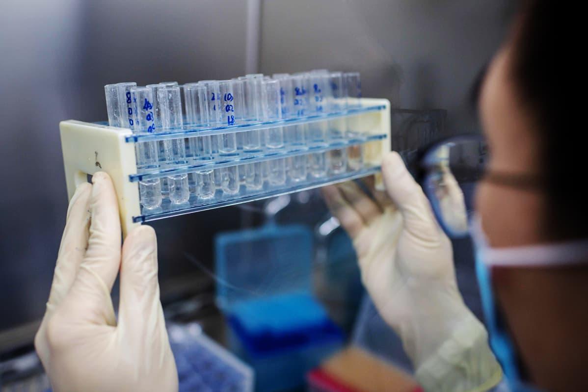 Kuvassa on kokeellinen rokote koronavirusta vastaan.