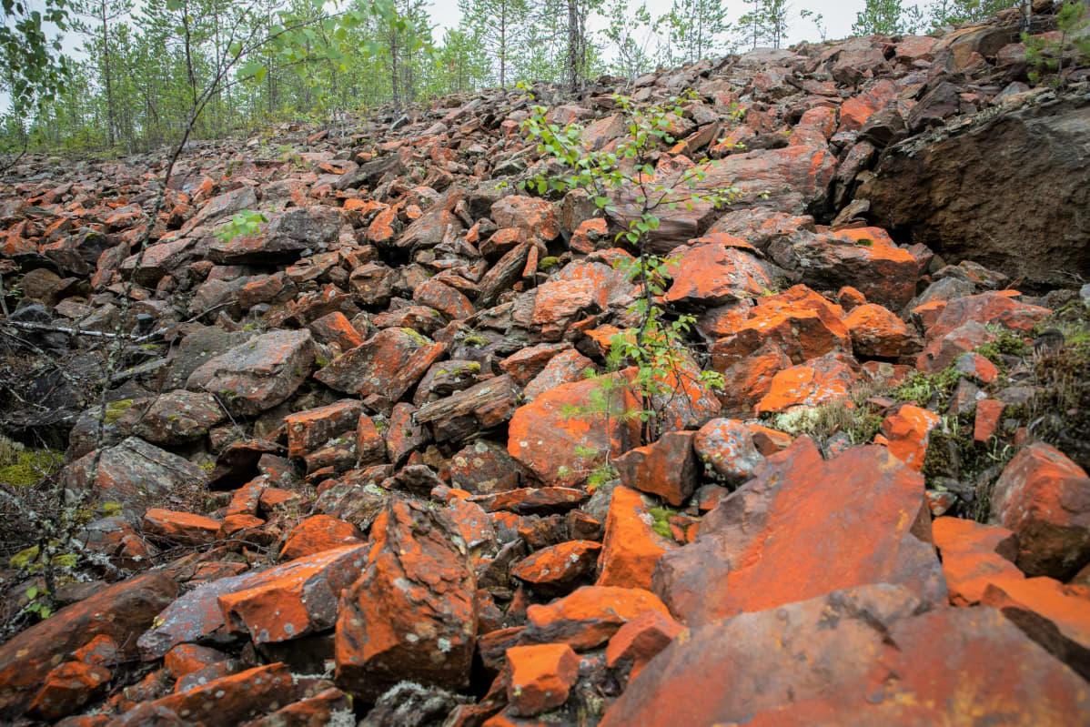 Kangasjärven kaivosaluetta Keski-Suomessa
