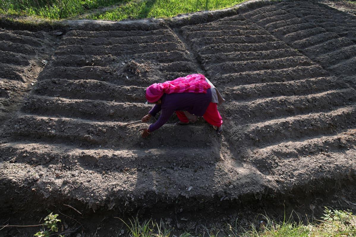 Intialainen maanviljelijä työskentelee pellolla.