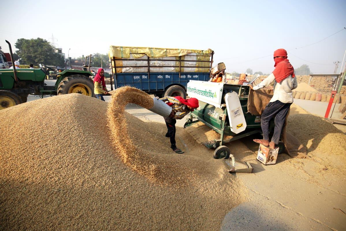 Työntekijöitä viljamarkkinoilla.