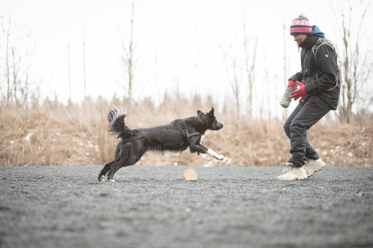 Tanja kouluttaa Kyytä.