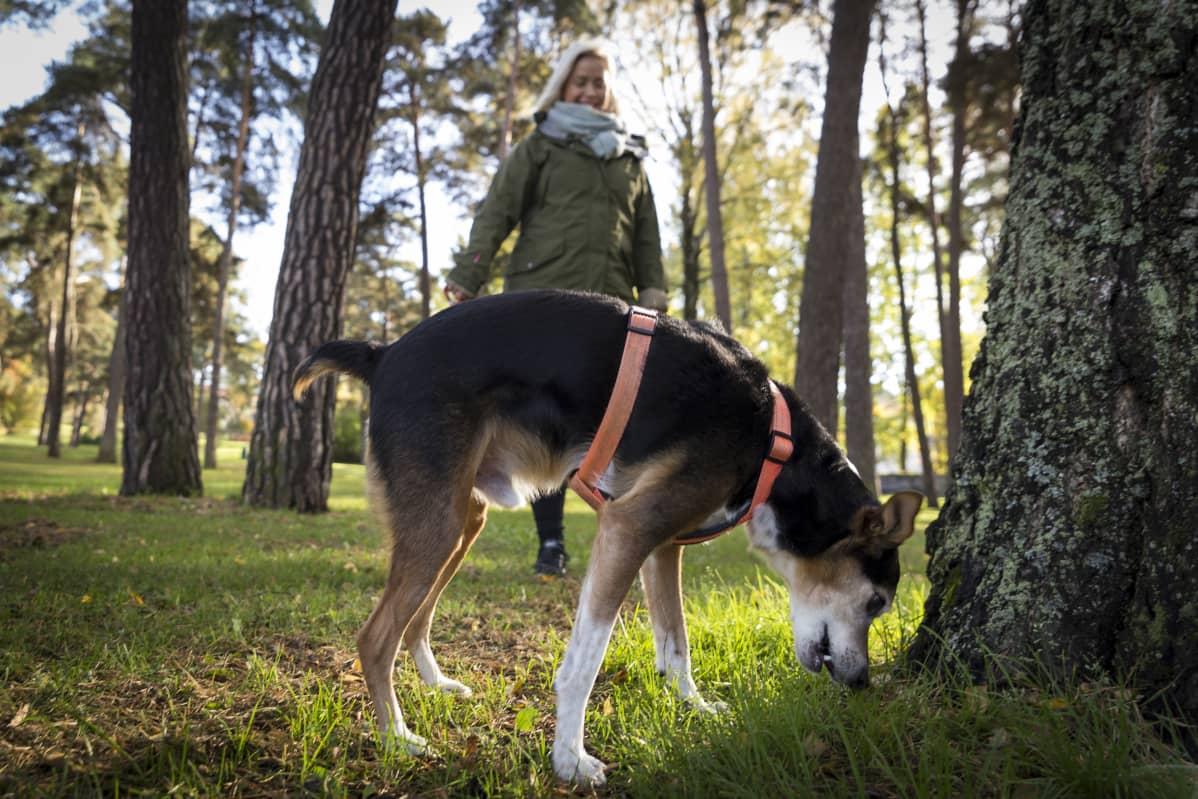 Inka ikonen kavelee Ukko koiransa kanssa