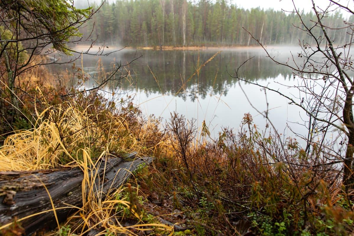 Haarikkojärven rantaa.
