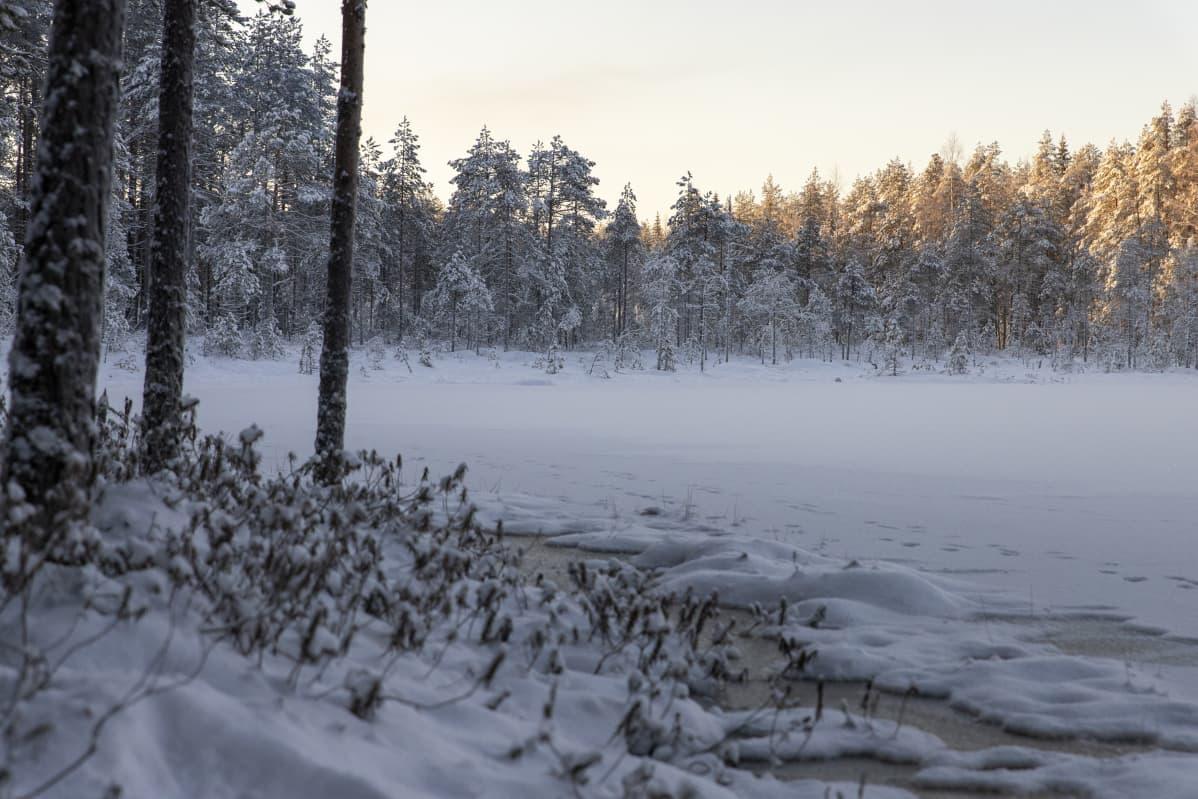 Jään ja lumen peittämä pieni suolampi pakkaspäivänä.