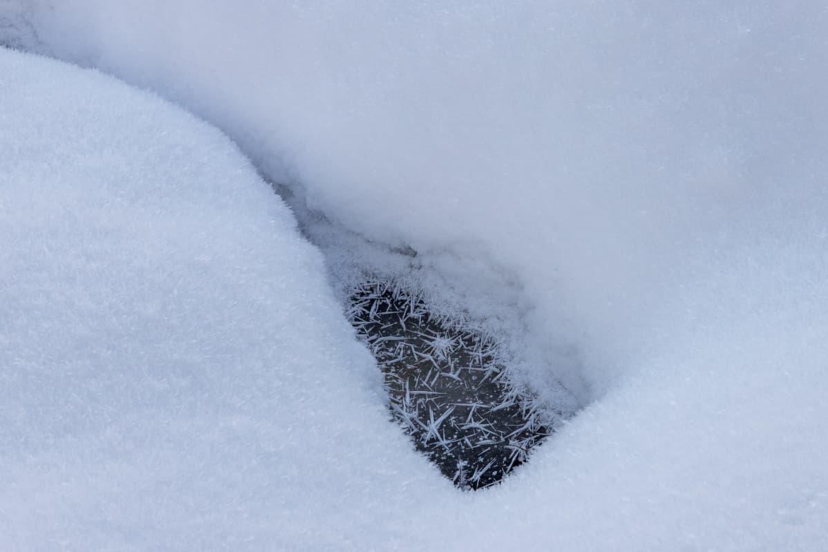 Riitteessä oleva suonsilmä lumihangen keskellä