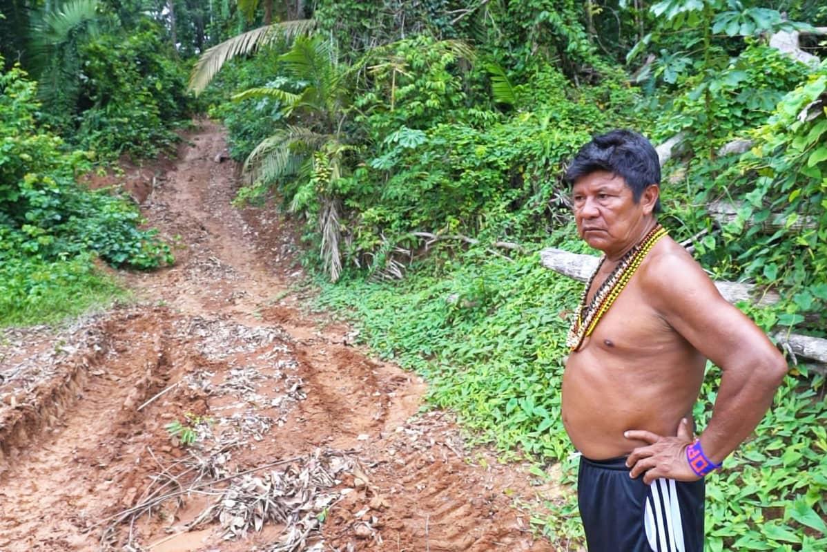 Mundurukujen kyläpäällikkö Juarez Saw katsoo traktorin jälkiä metsäautotiellä sademetsässä.
