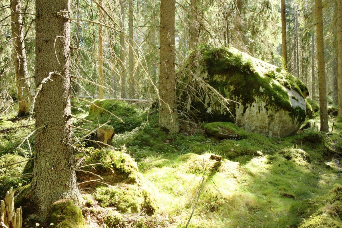 Tiitiäisen metsä