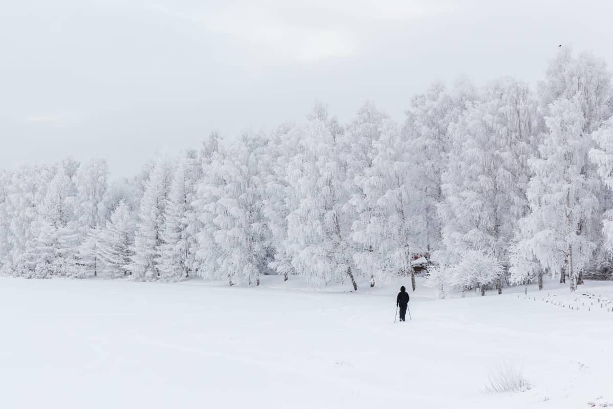 Sauvakävelijä talvisessa huurremaisemassa Rovaniemellä.