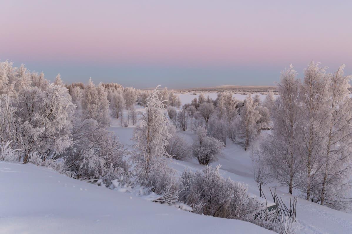 Huurteinen maisema Rovaniemellä.