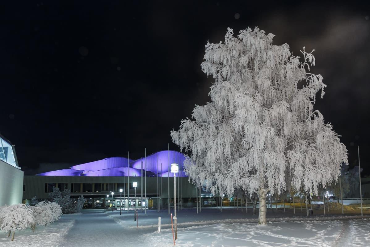Lappia-talo Rovaniemellä näkyy huurteisten koivujen välistä.