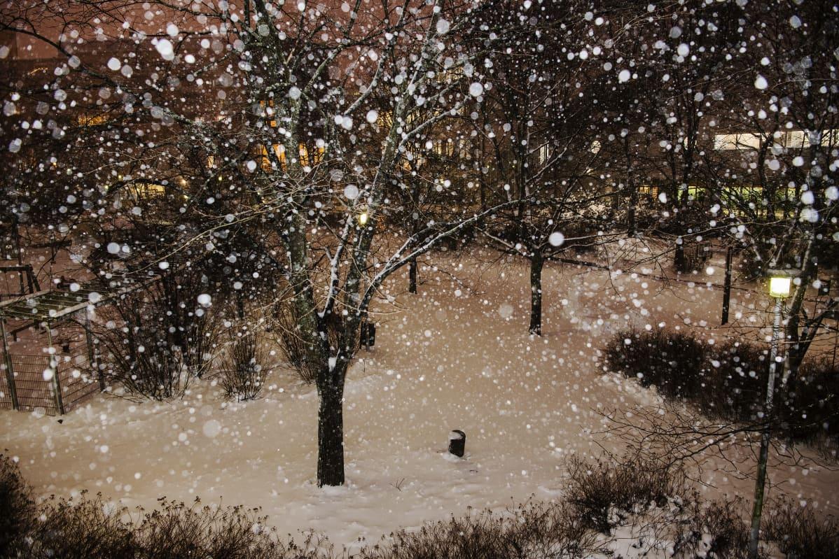 Lumisade alkoi Helsingissä noin kello viisi aamulla.