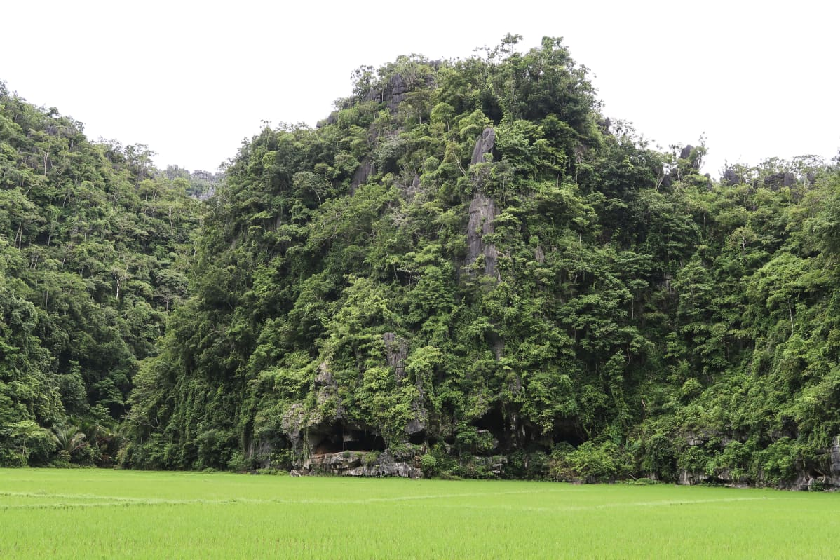Indonesiasta löytyi mahdollisesti 45 500 vuotta vanha kalliomaalaus siasta.