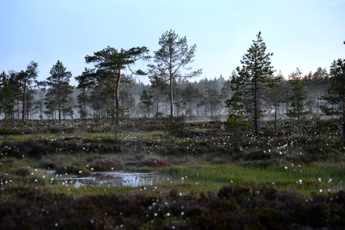 Satavuotiaalle Suomelle sataa luontolahjoja – Kirjailija suojeli metsän
