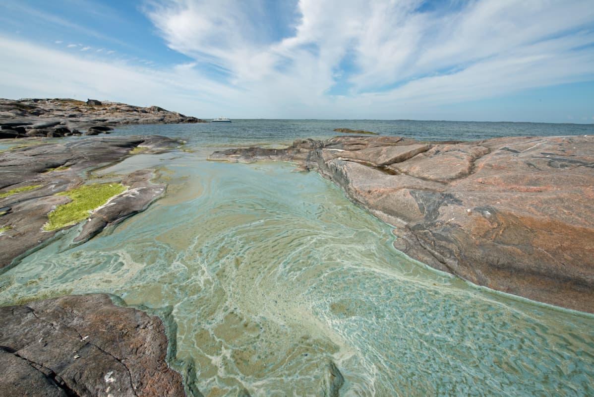 sinilevämössöä Saaristomerellä