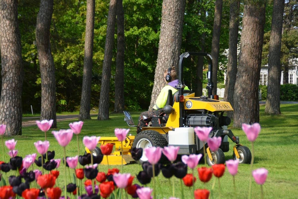 Nuori ajaa ruohonleikkuria puistossa.