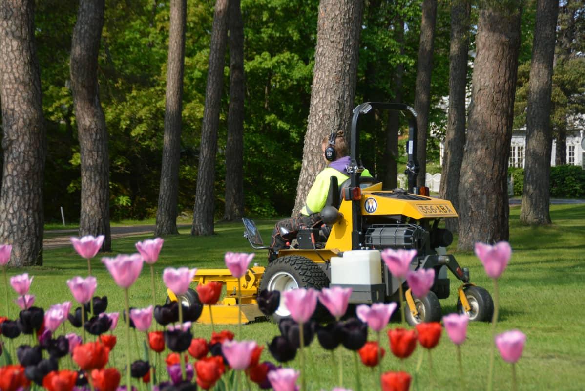 Nuori leikkaan nurmikkoa.