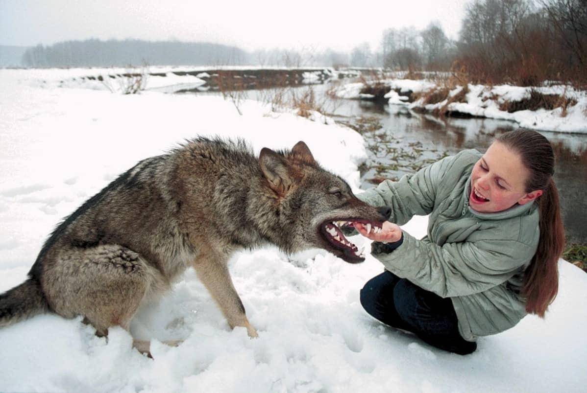 Nuori tyttö ja susi lumimaisemassa joen rannassa. Tyttö pitelee nauraen kiinni suden hampaista.