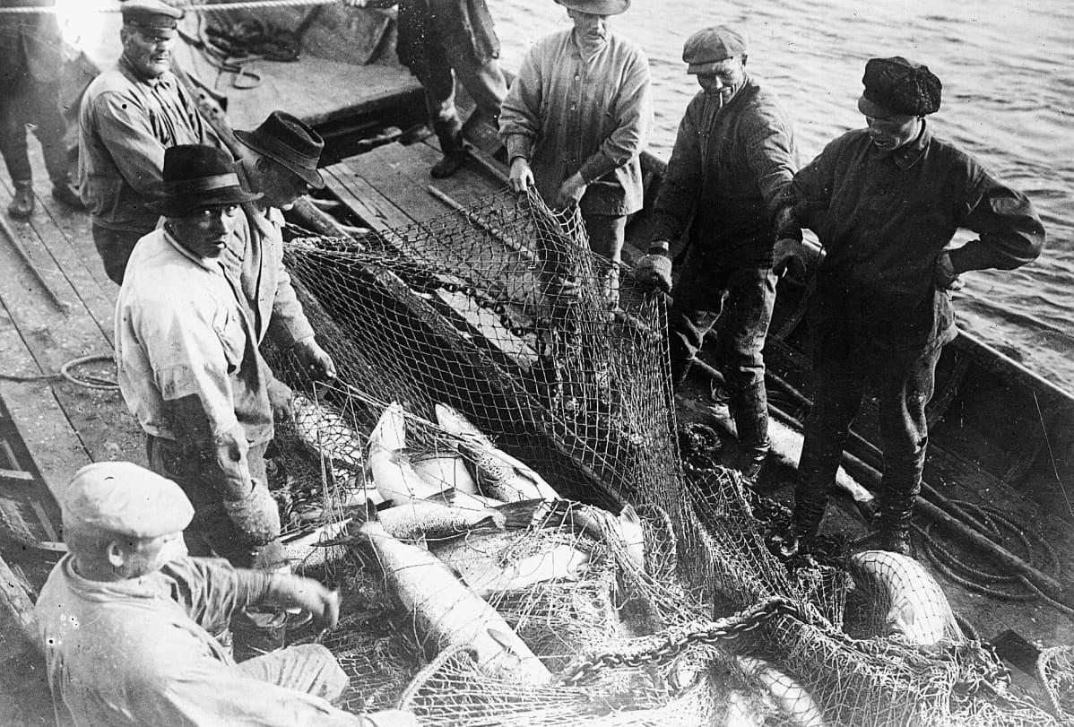 Vanhassa arkistokuvassa miehet merellä nostavat taimenverkkoja veneeseen