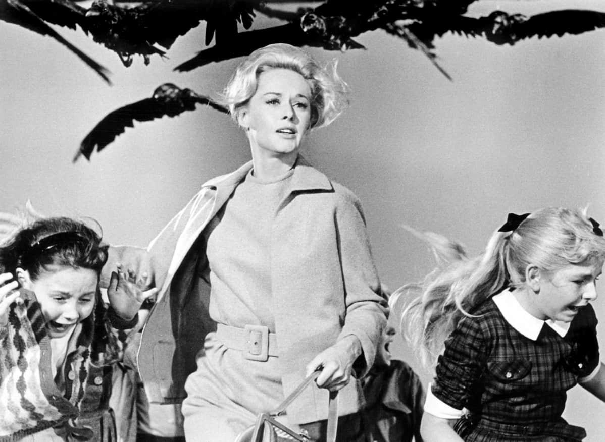 Tippi Hedren Alfred Hitchcockin  elokuvassa  Linnut.