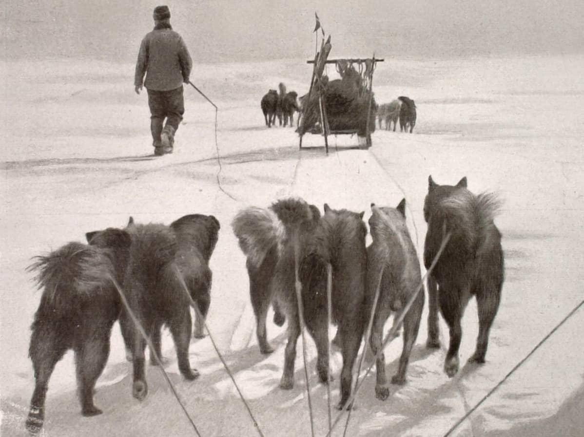 Mustavalkoinen kuva kahdesta koiravaljakosta.