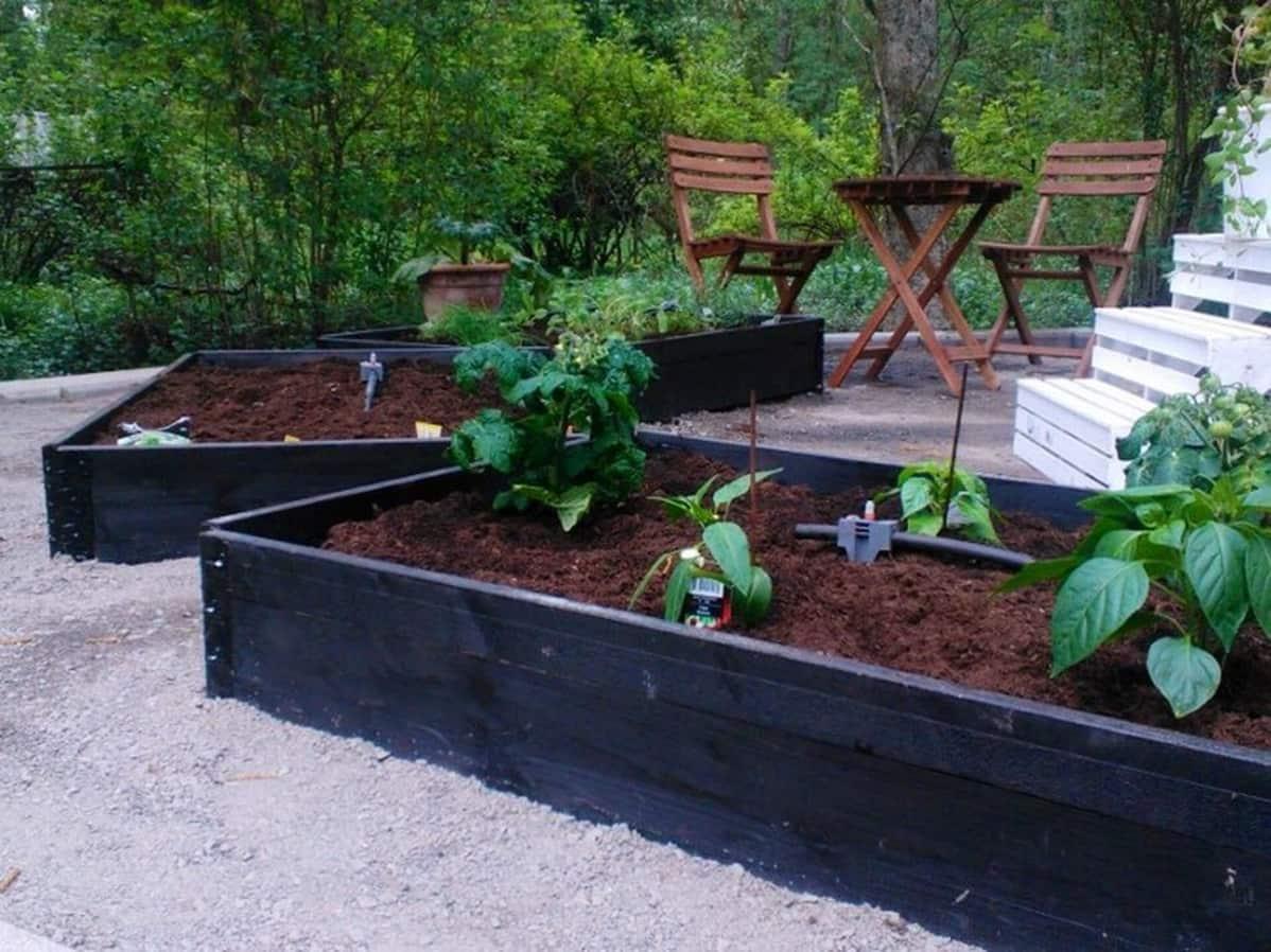 Lavakauluksista tehtyjä viljelylaatikoita  puutarhassa