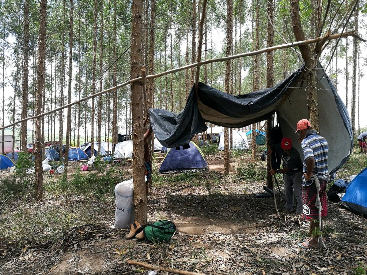 tendas na floresta
