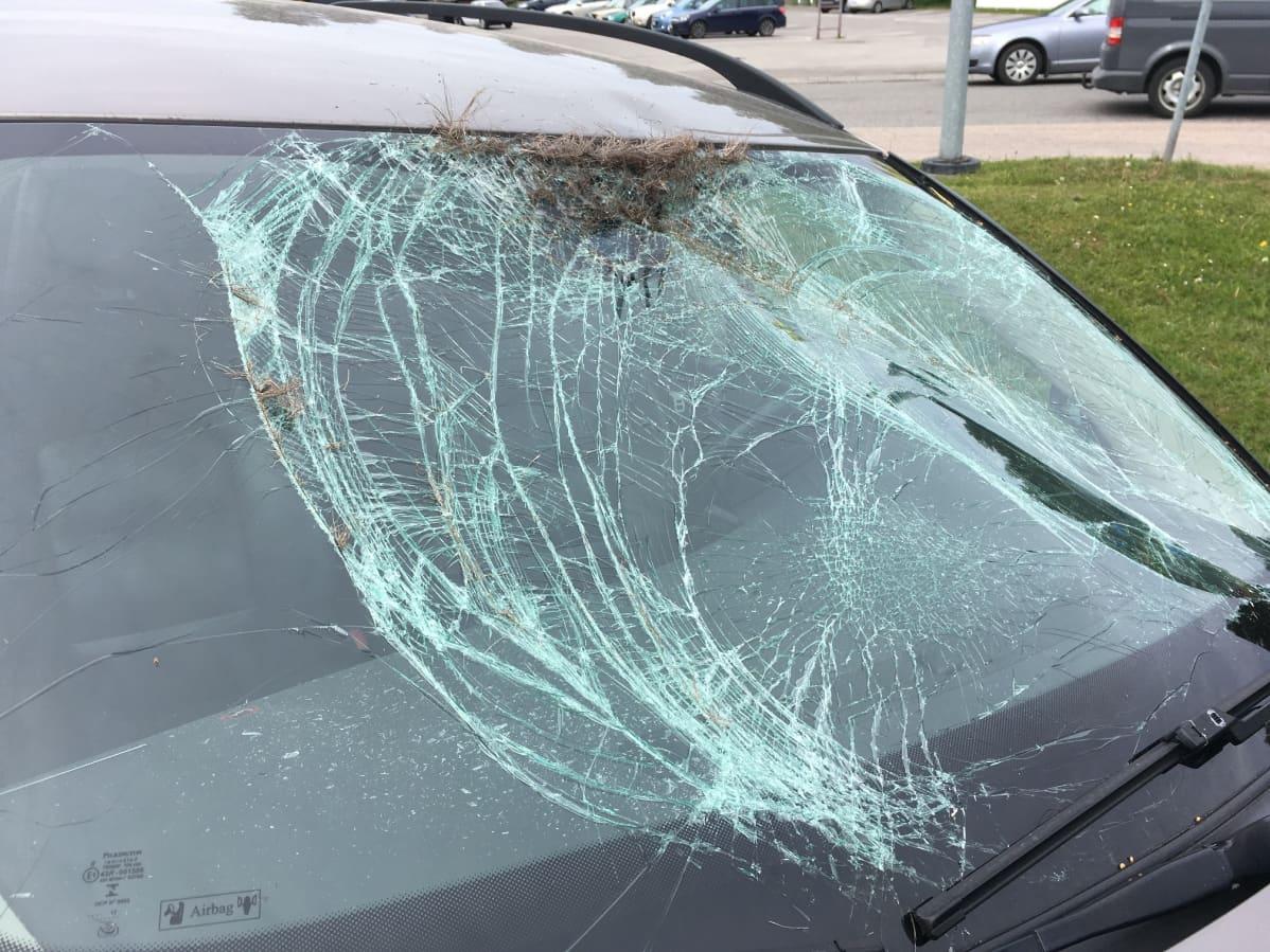 Auton tuulilasi rikki hirvikolarin takia