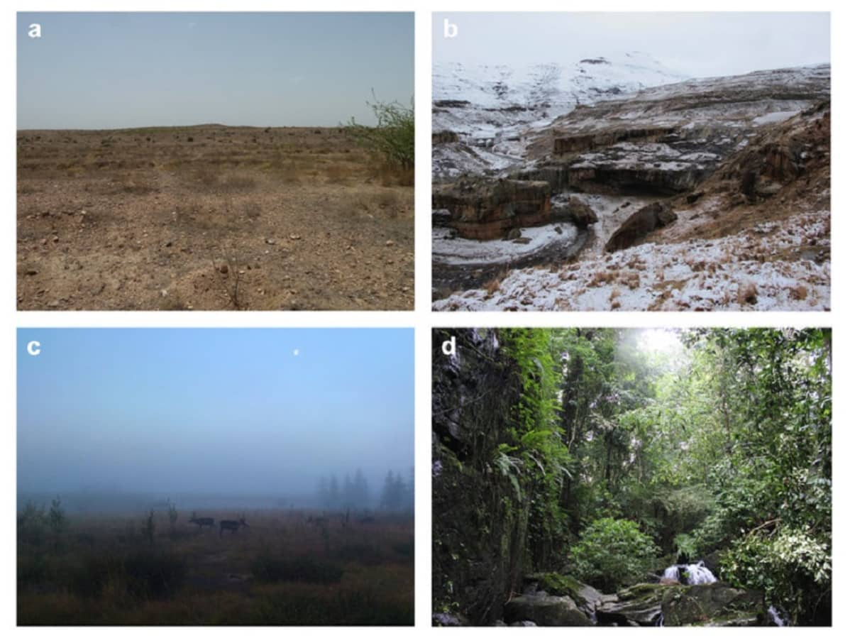 Neljä kuvaa: aavikko, jäinen vuorenrinne, sumuinen suo ja sankka sademetsä.