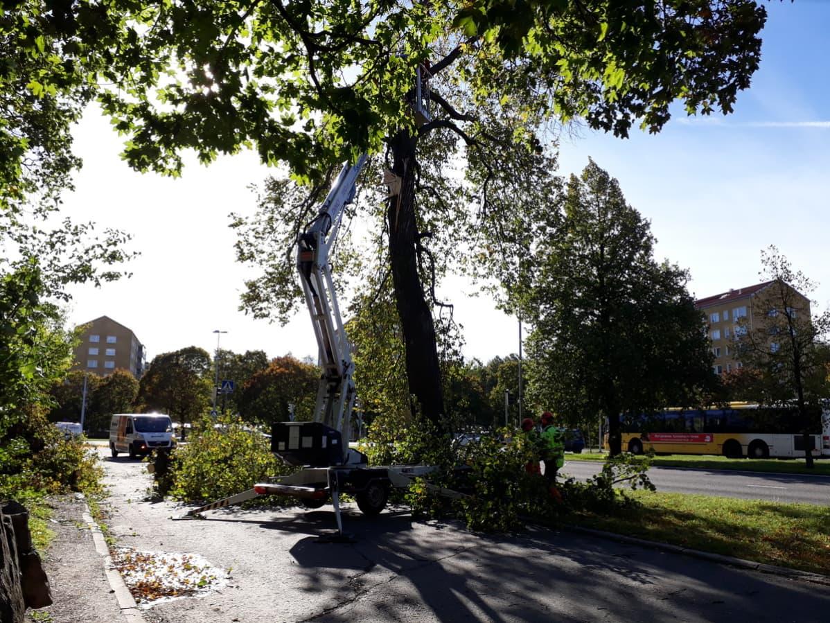 Suuri puu joutui myrskyn runnomaksi Uudenmaankadulla.