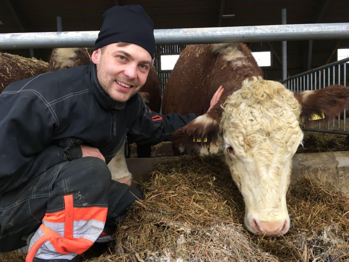 Maanviljelijä Tommi Hasu poseeraa Nougat-nimisen emolehmän kanssa Mattisten tilalla Kouvolassa.