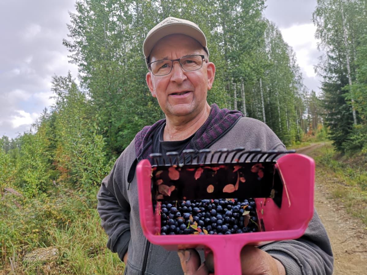 Olavi Malmbergin mukaan mustikoita löytyy parhaiten itäreunoilta ja soiden reunamilta.