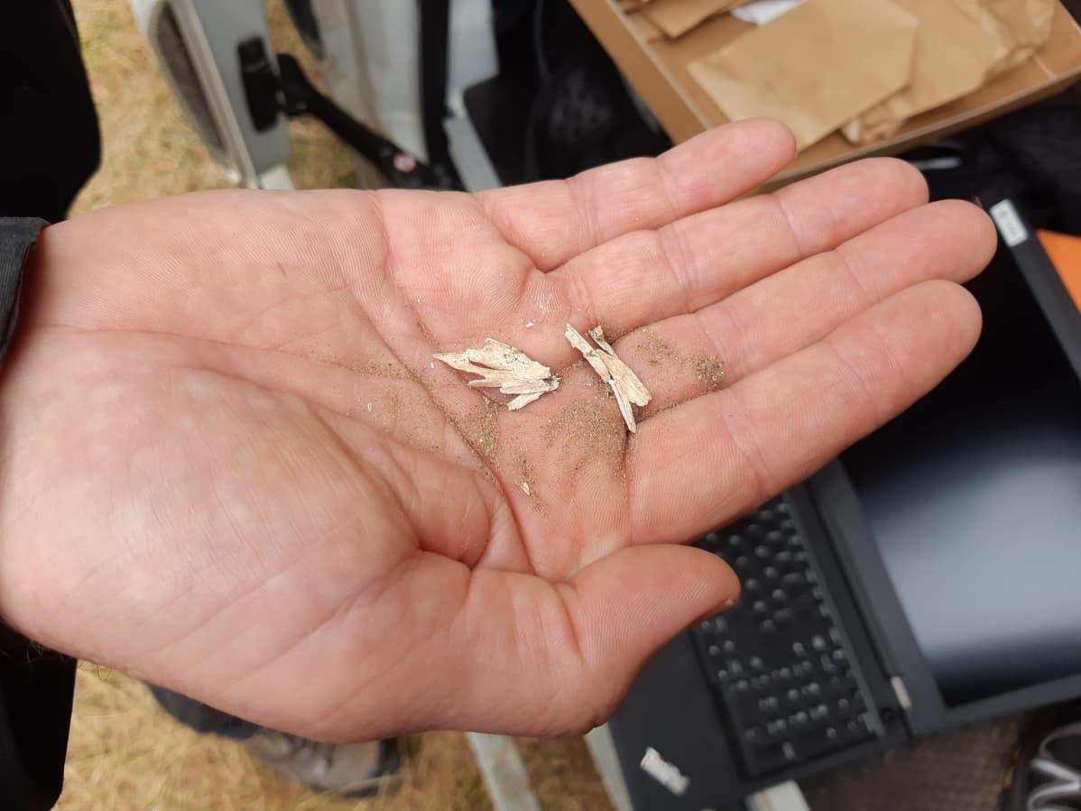 Esihistoria arkeologia muinaismuisto kalanruodot muinaiskala Sokli arkeologiset kaivaukset