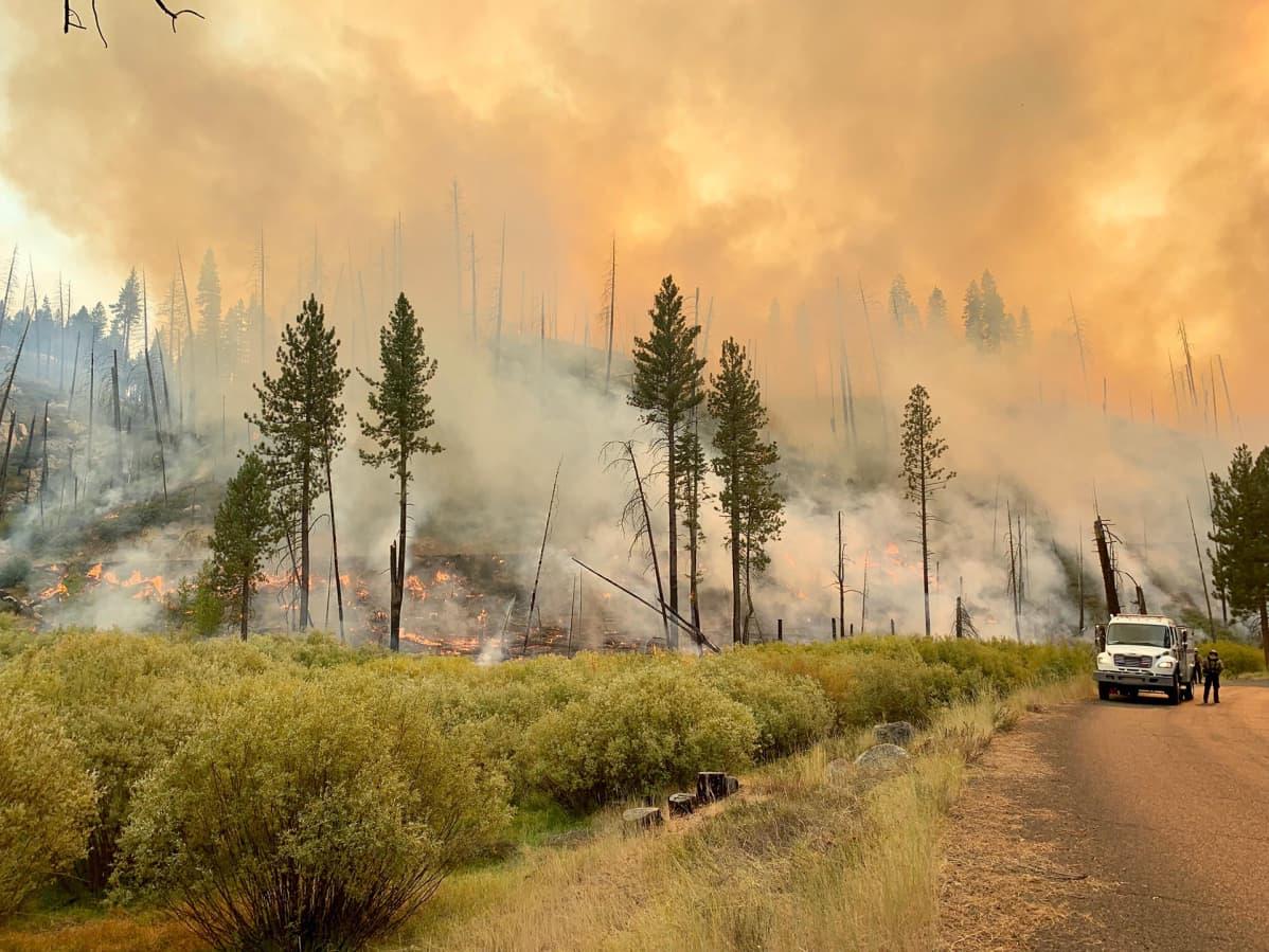 Metsä palaa Kaliforniassa.