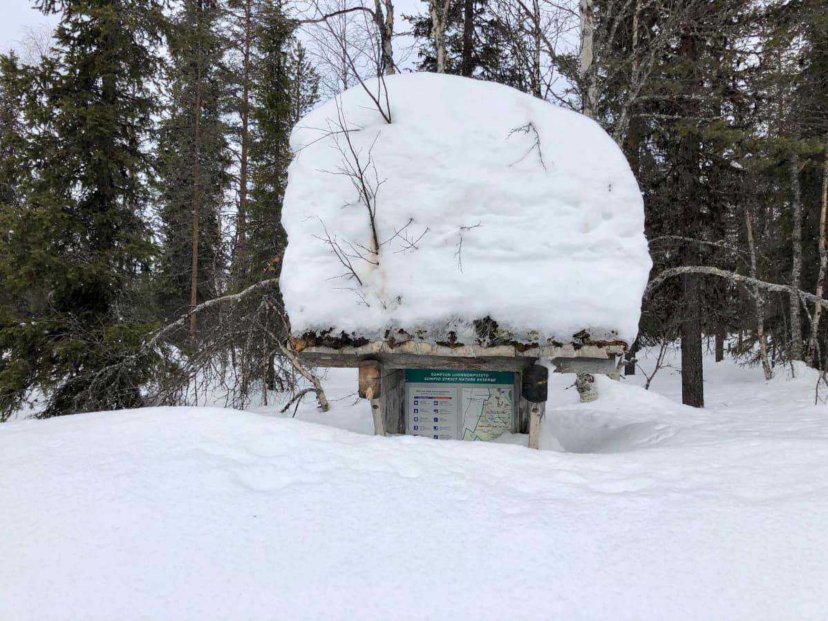 Miehenkorkuinen Sompion luonnonpuiston opastaulu Lapin paliskunnan luppometsän laidalla. Sodankylä, Sompiojärventie 11.3.2020