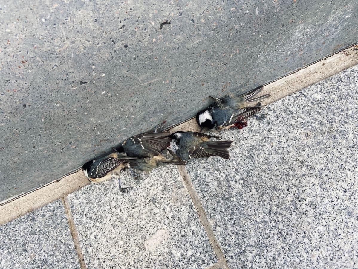 Kuusitiaisia on ohikulkijoiden mukaan tipahdellut Triplan viereiselle jalkakäytävälle jo useampana päivänä.