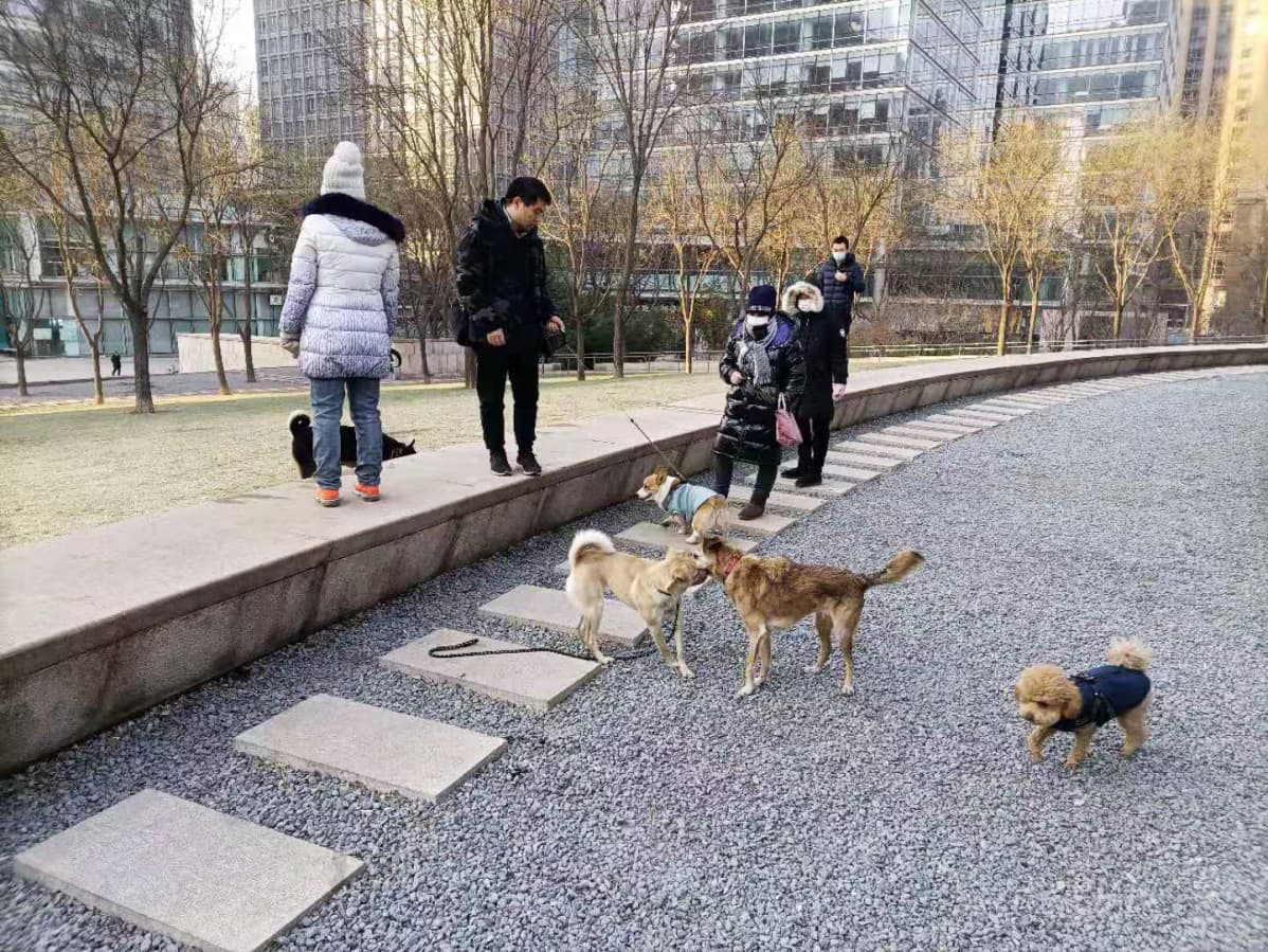 Koiranulkoiluttajia puistossa.