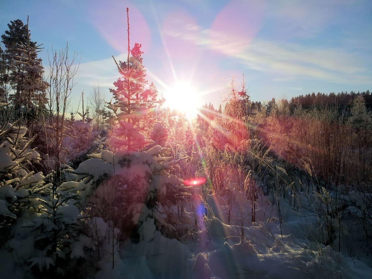 Aurinko puiden lomassa