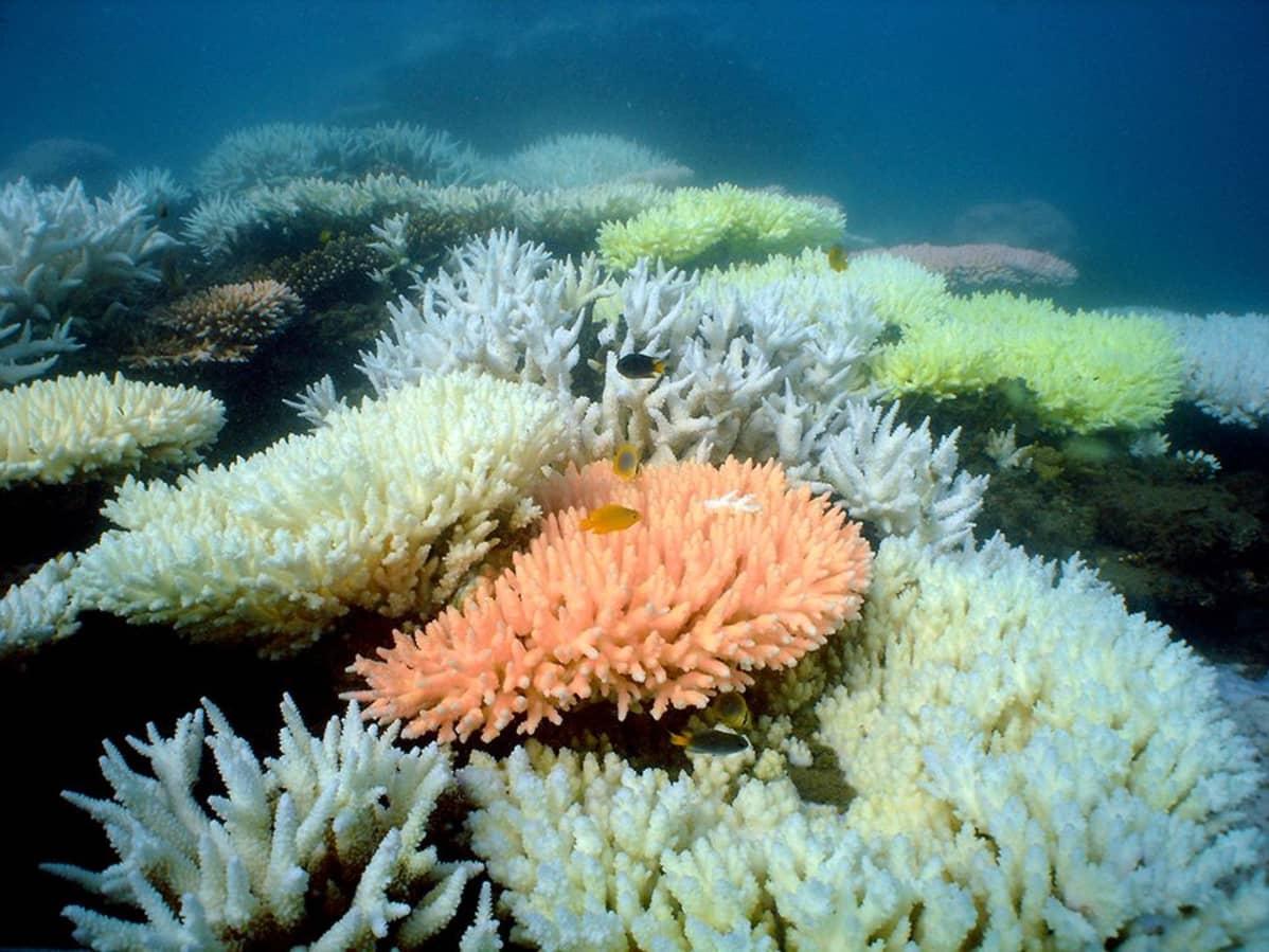 Queenslandin rannikolla sijaitseva koralliriutta.