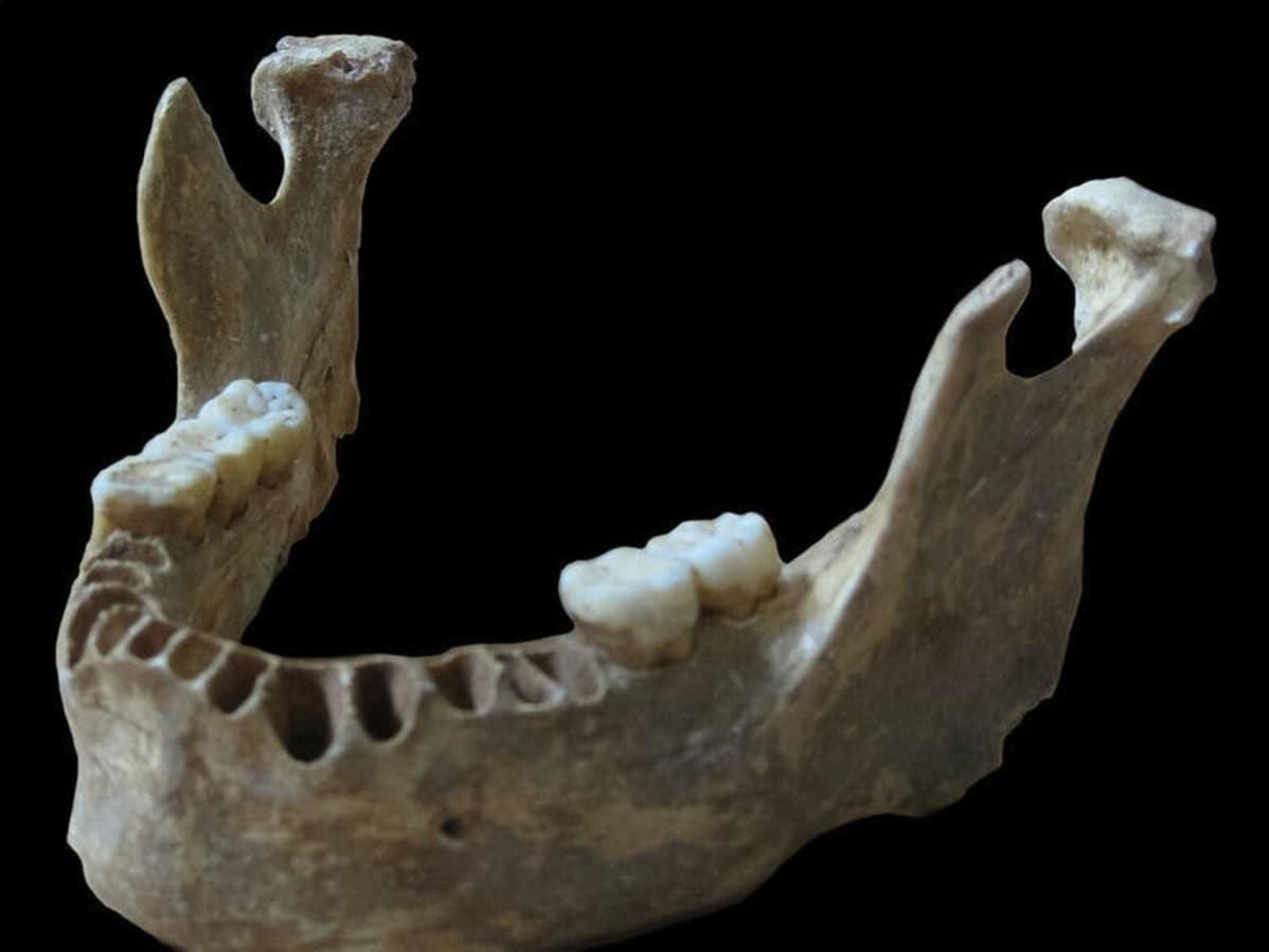 DNA-näyte otettiin noin 40 000 vuotta sitten eläneen miehen leukaluusta.