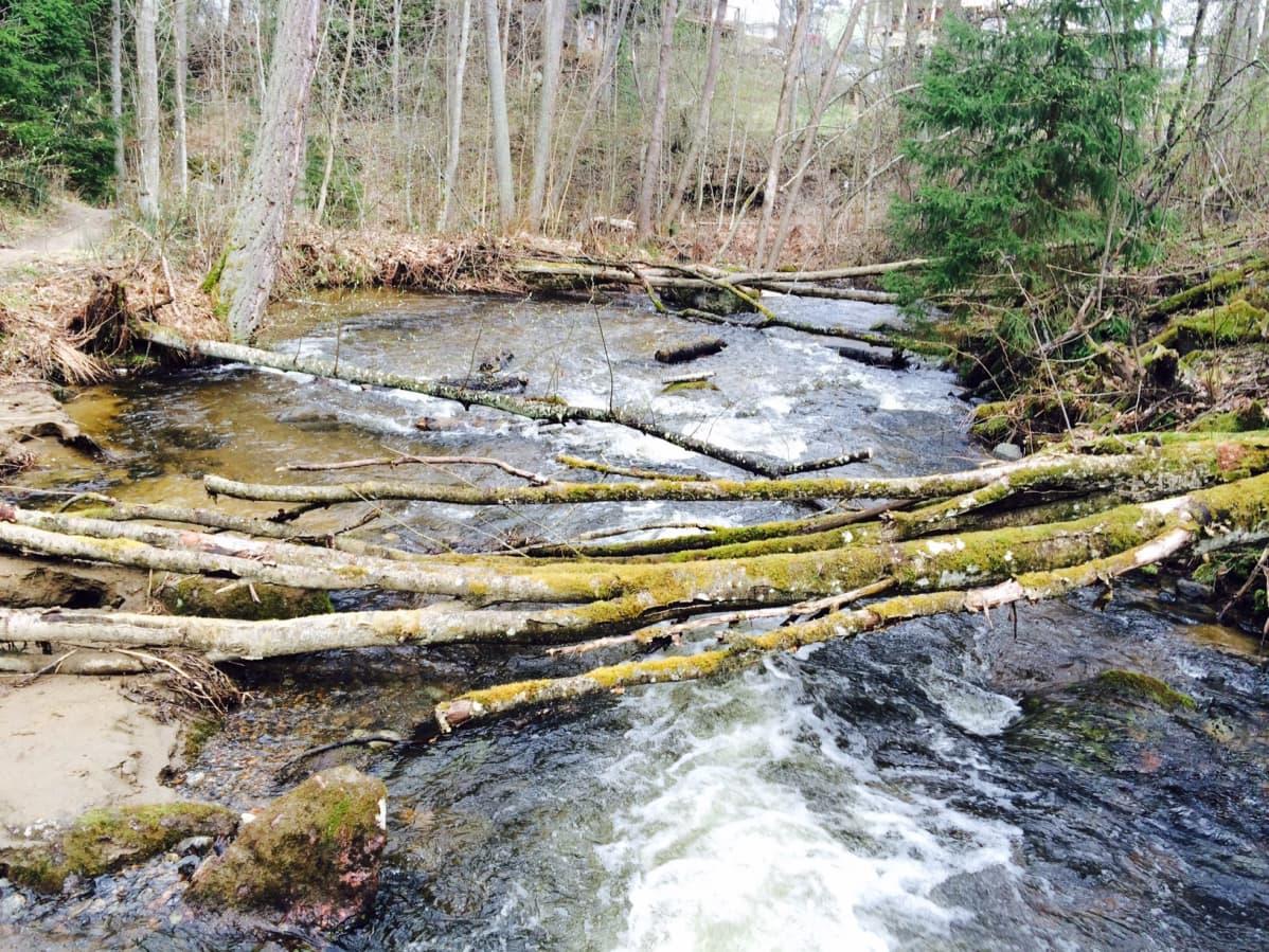 Urpolan luonnonsuojelualuetta halkoo Urpolanjoki. Sen ylle kaatuneita puita ei raivata pois.