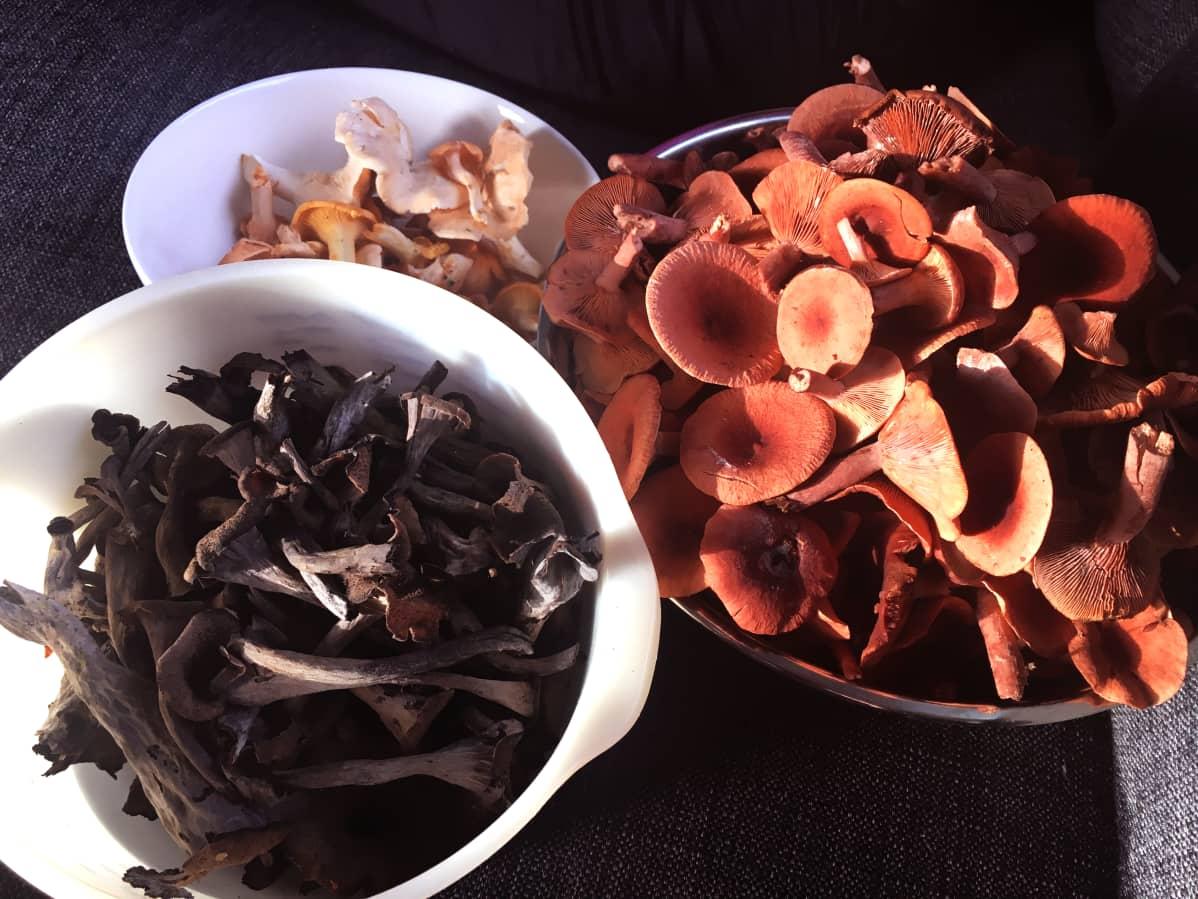 Sieniä.