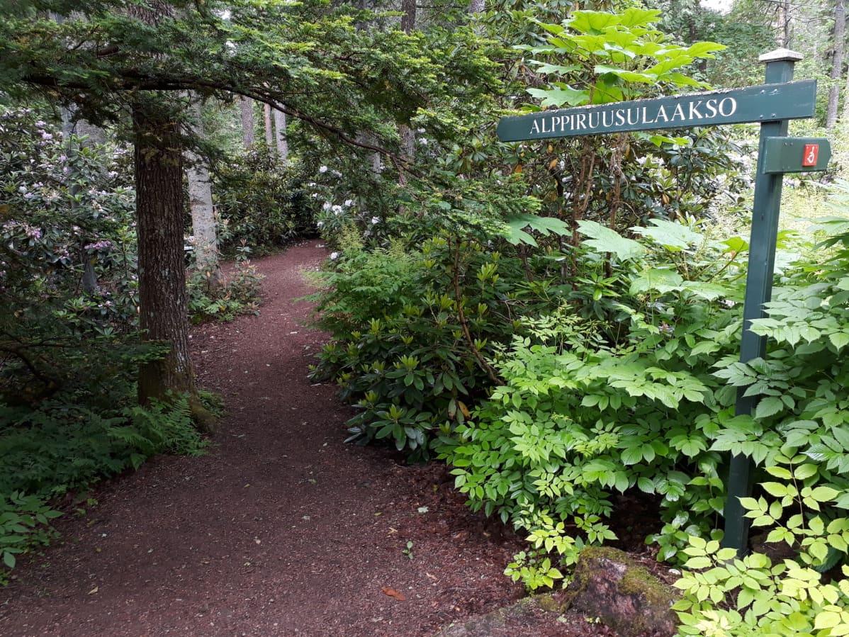Polku johtaa metsään.