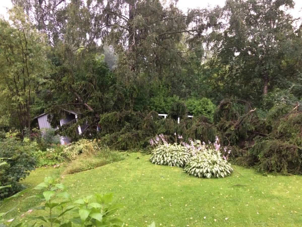 Vanha kuusi kaatui liiteriin Helsingin Pirkkolassa Kiira-myrskyn aikana.