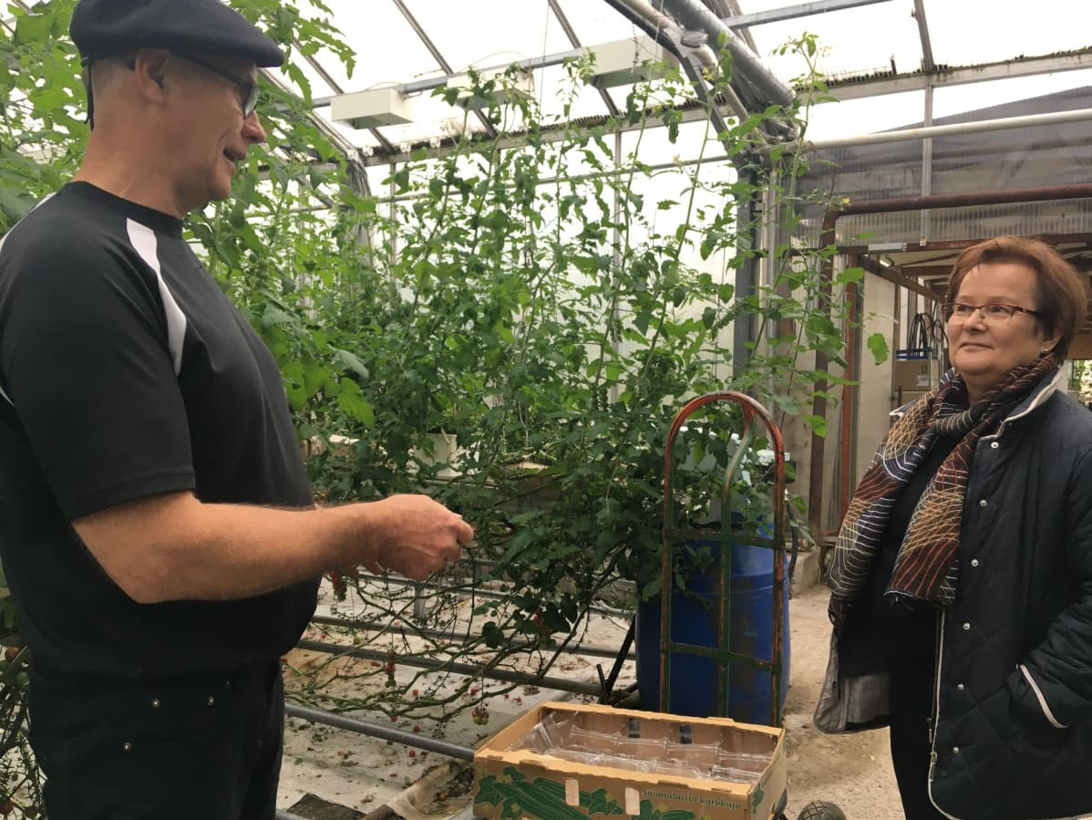 Mirja Mustonen ja Timo Tuorila keskustelevat kasvihuoneella
