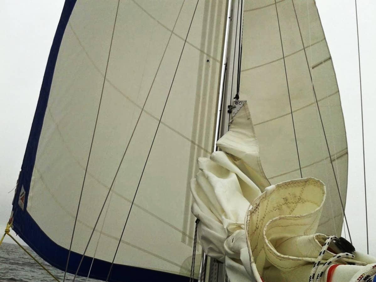 Veneen sinivalkoinen purje