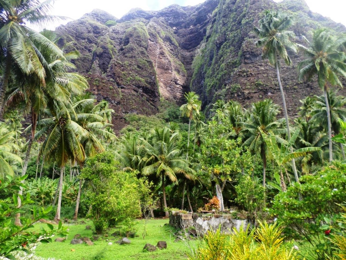 Taustalla jylhä vuori, etualalla vihreää viidakkoa palmuineen