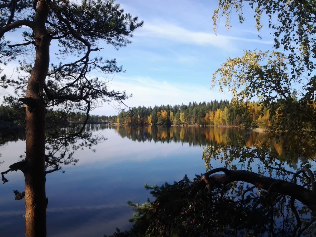Enonniemen rantamaisemaa Etelä-Konneveden kansallispuistossa.