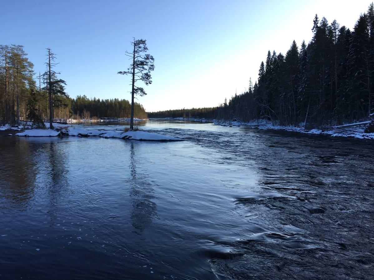 Talvinen Neitikoski virtaa Lieksanjoessa Ruunaan reitkeilualueen kupeessa.
