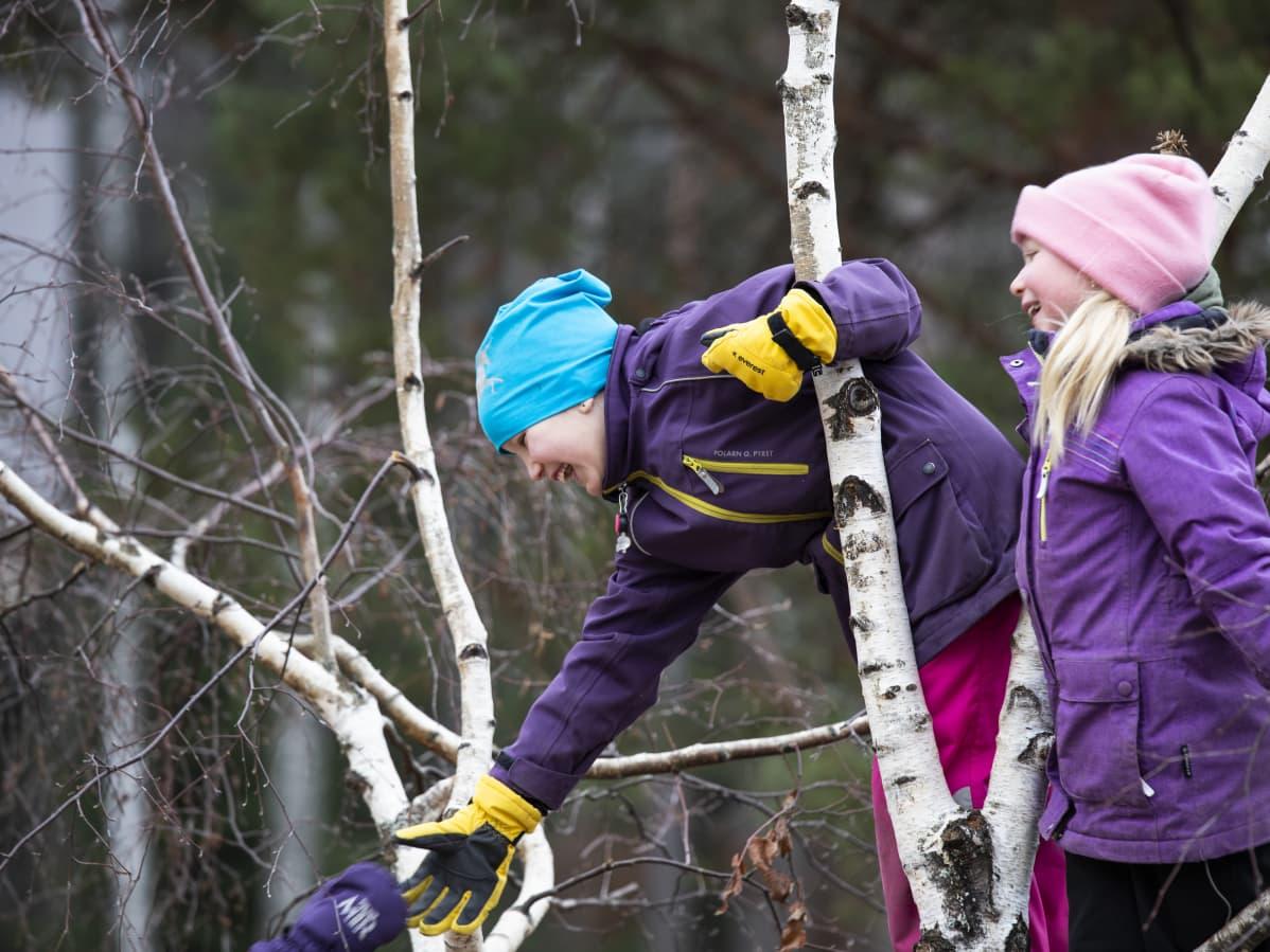 Lapsia kiipeilemässä puussa koulun pihalla.