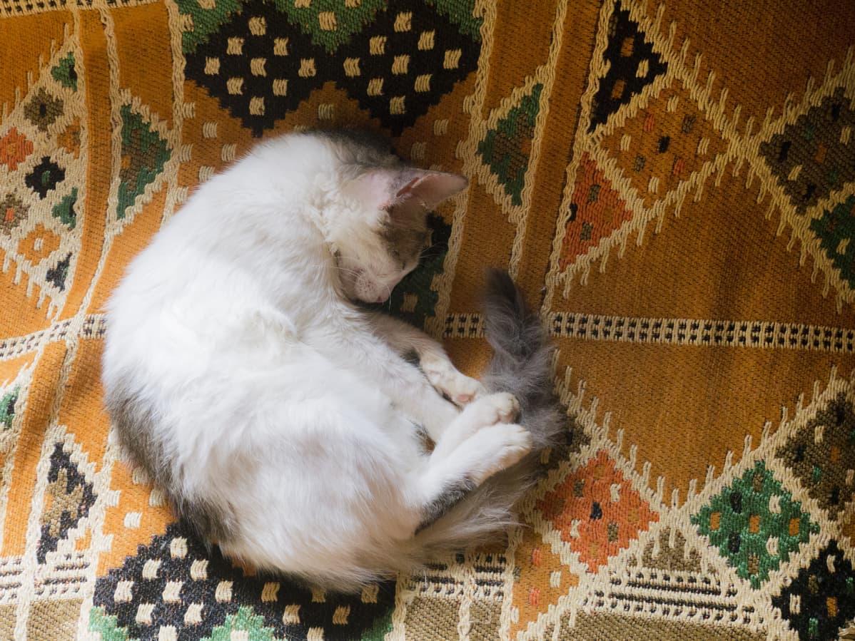 Kissa nukkuu.